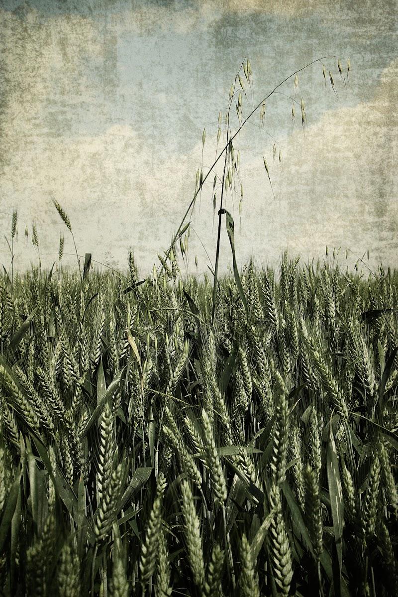 Grain di Marcello Zavalloni