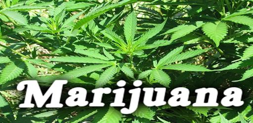 dating til marijuana rygere