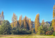 Poplar trees are a characteristic feature of this small town.