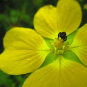 Dog-bee (Irapuã)