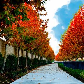 Colorful Neighborhood by Merna Nobile - City,  Street & Park  Neighborhoods ( neighborhood, leaves, sidewalk )