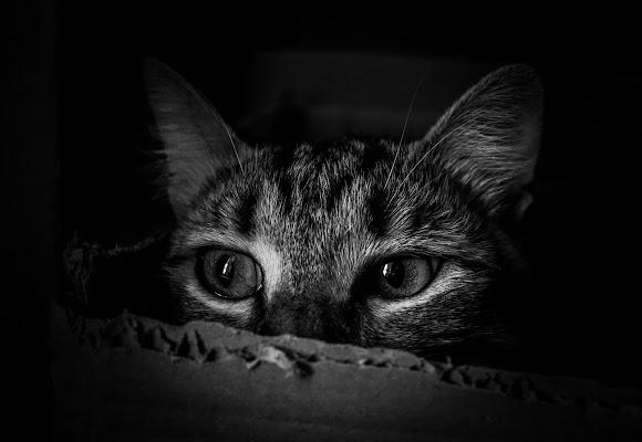 Woody  in the Box di stefania_pelosi