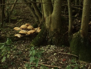Photo: Mushroom clusters and tree spirits....