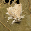 Moth infested with fungi