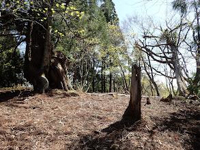 中間のピークに巨木(ここで右に折れる)