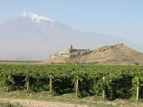 Photo: Grapes on the Ararat plain, which the mountain suddenly grows out of, and Khor Virap monastery.