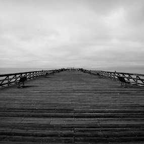 Seacliff Pier In The Morning by Wayne Louie - Buildings & Architecture Bridges & Suspended Structures ( pier at seacliff state beach in california nikon d7000 lightroom )