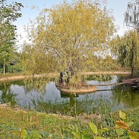 little island by Bojan Dobrovodski - City,  Street & Park  City Parks ( little island small lake bizovac bonanza )