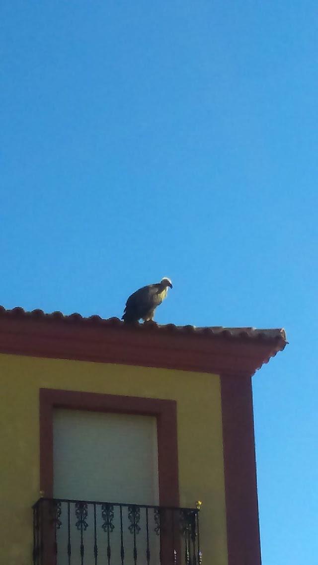 En el tejado de una vivienda permaneció más de una hora.