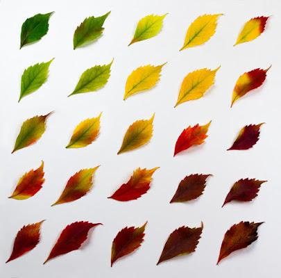 pattern gradiente