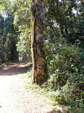 Photo: Sacred Forest, Limpopo