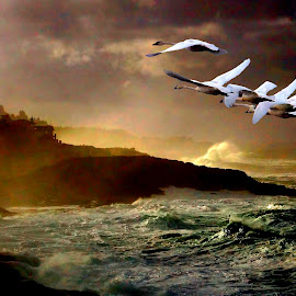 Going home by Gaylord Mink - Landscapes Weather ( waves, ocean, clifts, swans )