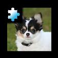 Jigsaw Puzzle: Puppy