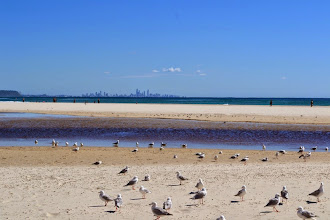 Photo: Seaguls and Gold Coast in back