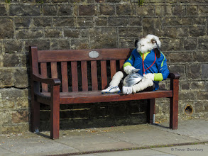 Photo: Sheepfest, Sedbergh, Cumbria