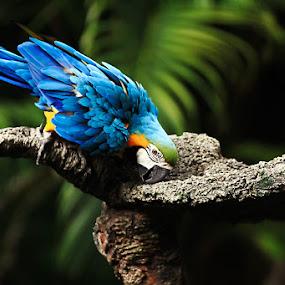 Sharpen by Agung Cahyono - Animals Birds