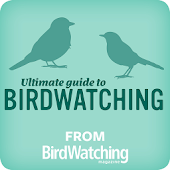 Ultimate Guide to Birdwatching