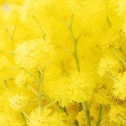 К чему снится желтый цвет?