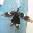 Dark Fishfly