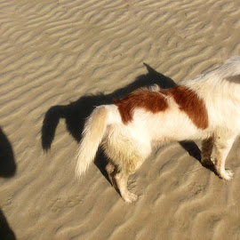 iPad Shadows..... by Dickson   Shia - Animals - Dogs Portraits ( nature, beach, shadows, dog )