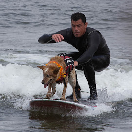 Dog Surfing  by Janet Marsh - Animals - Dogs Playing ( dog surfing,  )