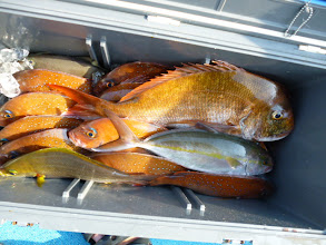 Photo: 真鯛11枚、オナガ、ネリゴ・・・でした!