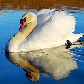 by Dawn Price - Animals Birds (  )
