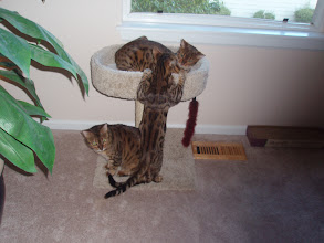 Photo: August - he's growing rapidly and tries to oust Roxanna from her favorite perch.