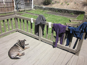 """Photo: A zero day"""" drying clothes with Sula"""
