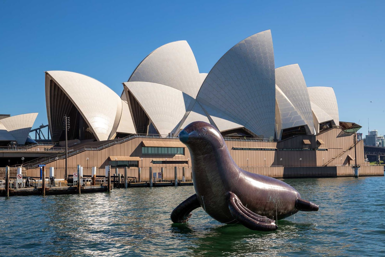 A Giant Inflatable Seal to launch Sydney Opera House's Facebook chatbot
