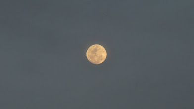 Photo: a day away from a totally full moon