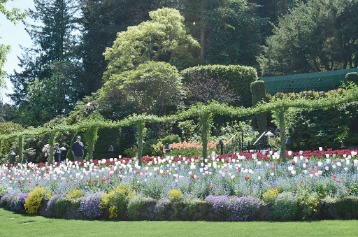 Butchart-Gardens-flowers.jpg - See the 55-acre Butchart Gardens in Victoria, B.C., filled with beautiful flowers and winding lanes, on an American Cruise Lines vacation.