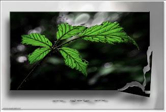 Foto: 2011 07 24 - P 129 E - nur grün