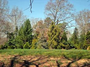 Photo: Conifer Garden