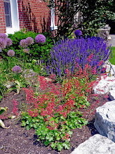 Photo: Coral Bells and May Night Salvia - drought-tolerant and colourful.