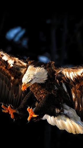 Wings.Eagle.Live wallpaper