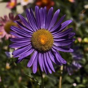 by Bojan Rekic - Flowers Single Flower