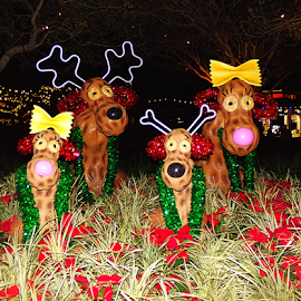 Disney Christmas Dogs Landscape by Cheryl Beaudoin - Public Holidays Christmas ( lights, dogs, christmas, night, landscape, disney,  )