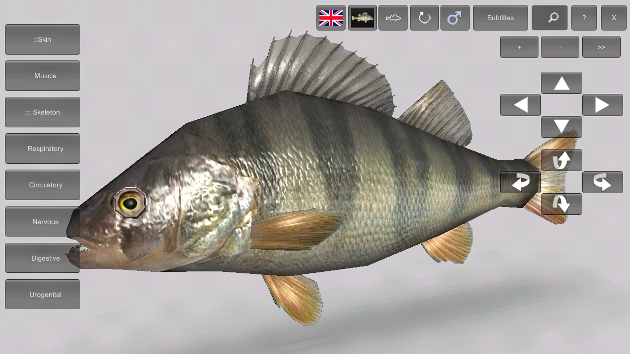 3d fish anatomy android apps on google play 3d fish anatomy screenshot sciox Choice Image