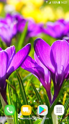 Beautiful Spring Flowers Live Wallpaper 1.0.4 screenshots 3