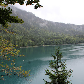 Alpsee Schwangau by Ashley Rolland - Landscapes Travel ( water, see, schwangau, alpsee, germany, forest, lake,  )