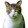 com.screenworldstudios.animals