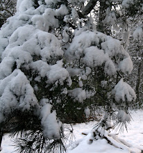 Photo: That was a ready to start fire behind the pine limb!
