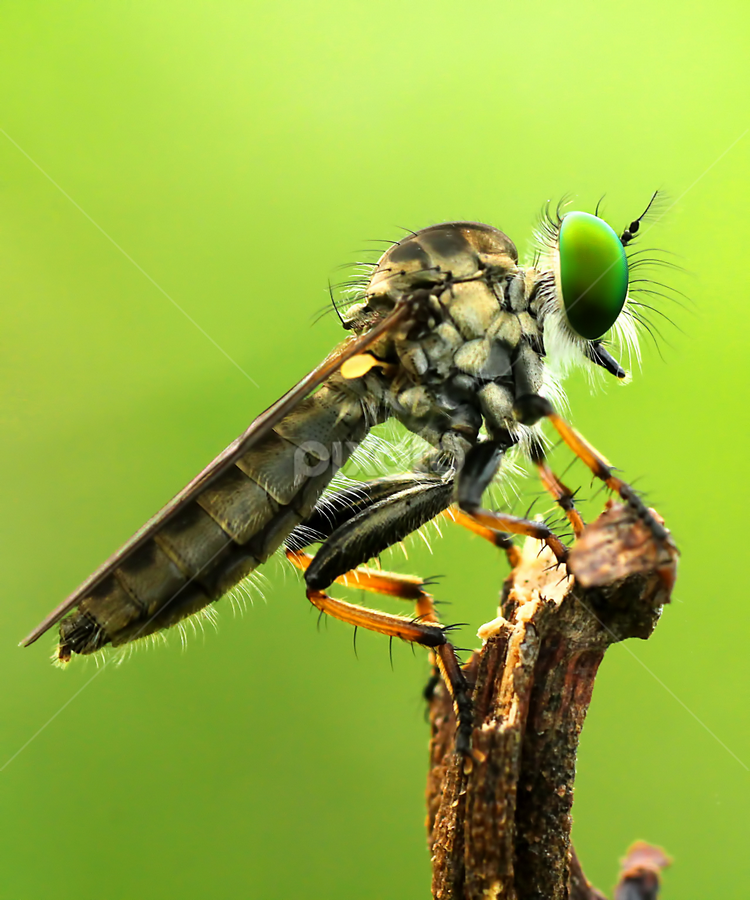 by Robby Wijaya - Animals Insects & Spiders