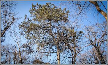 Photo: Conifer  din Piaţa Basarabiei - Parc - 2017.02.13
