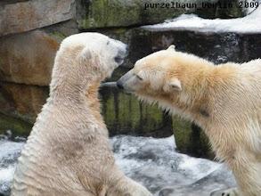 Photo: Gutgelaunte Eisbaerchen Knut und Gianna :-)