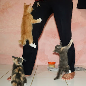 by ADe ANkas - Animals - Cats Playing (  )
