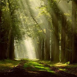 by Gert de Vos - Landscapes Forests