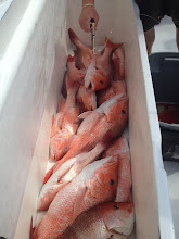 Photo: stocking up on snapper