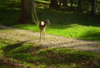 Photo: Impressionen vom Wildpark